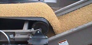 Bean Conveyors